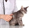 Ветеринарные клиники в Чесме